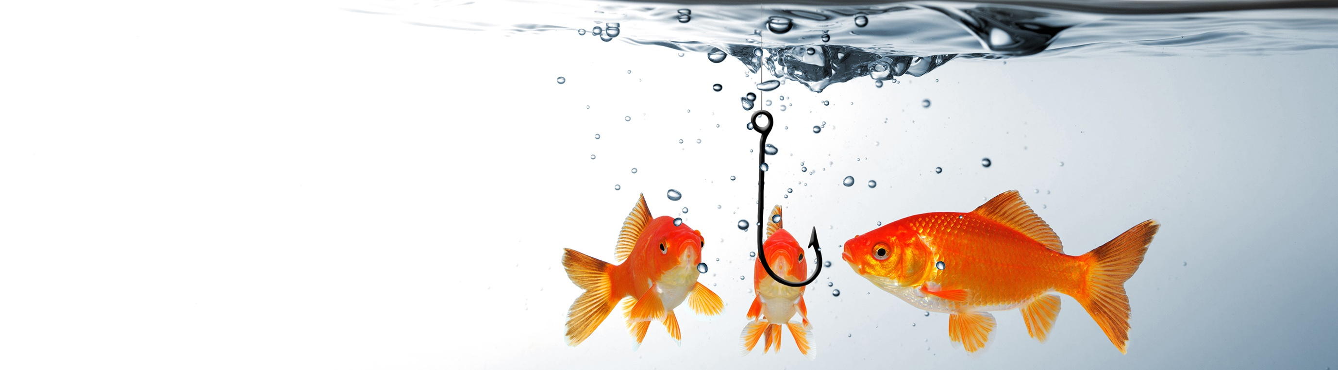 10 Tips for Branded Content that Hooks a Goldfish